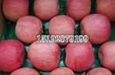 浙江苹果产地供应、今日红富士苹果价格