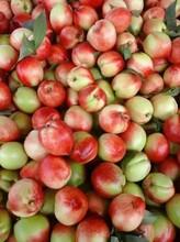 老毛桃百度云、今日山东、砀山油桃价格、中国油桃之乡