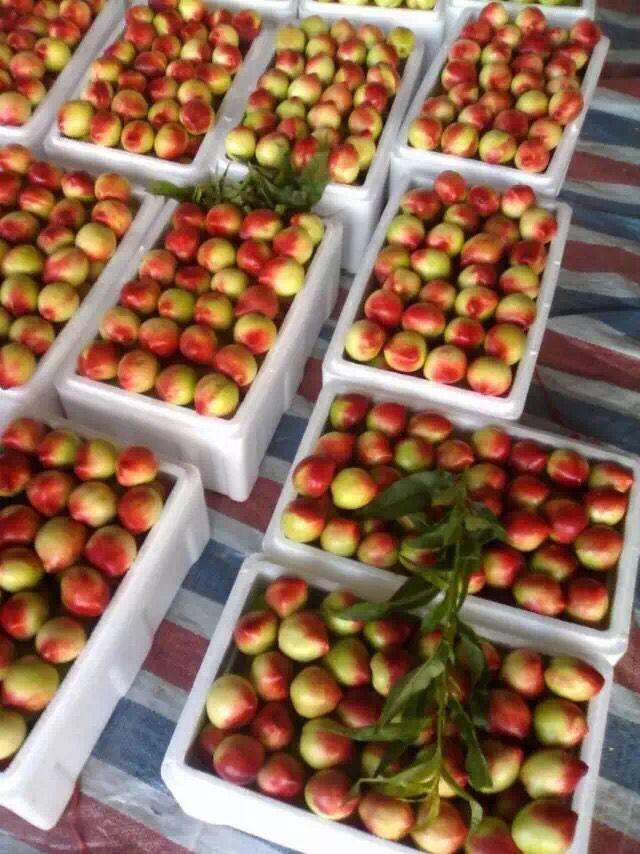 红富士苹果果蔬基地京欣西瓜的产量是多少千克每立方米