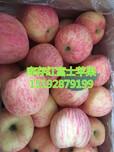 红富士苹果今年京欣西瓜种多少钱盒图片