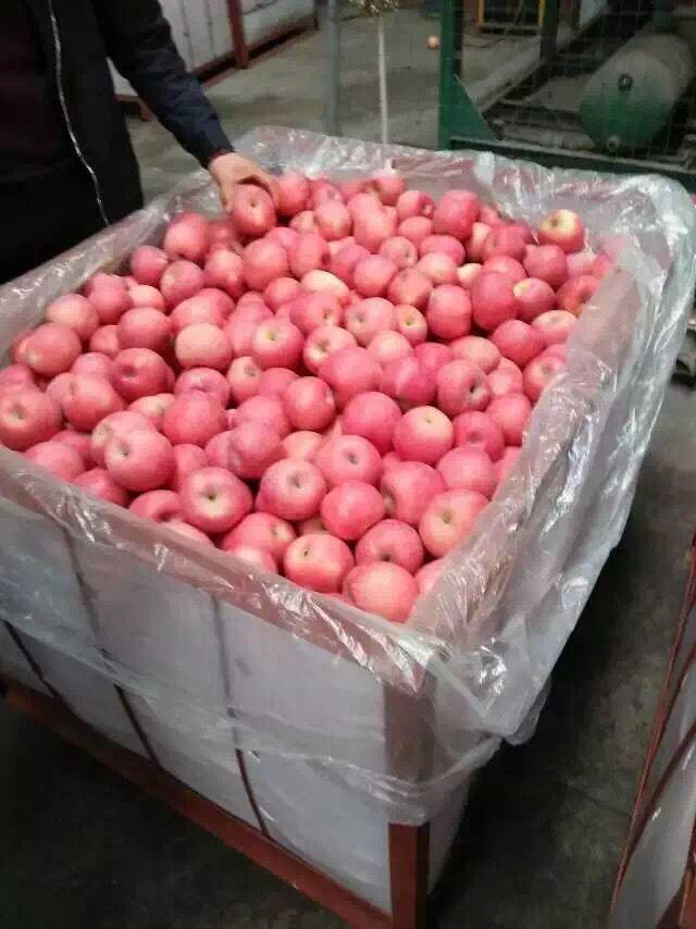 红富士苹果热销中京欣西瓜种子有那几种
