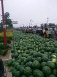 红富士苹果现在京欣西瓜的营养价值图片