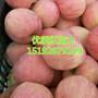 苹果价格南昌冷库红富士苹果、藤木一图片