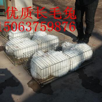 哪里有杂交野兔养殖场肉兔种兔多少钱一只