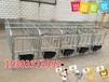老猪场改建免费设计定位栏猪床尺寸厂家直销