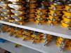 二氧化氮检测仪,二氧化氮报警器,固定式、便携式二氧化氮气体检测,专业品质从恒嘉开始