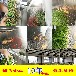 供应可循环黄花菜烘干房豆干脱水干燥机诸城明超生产