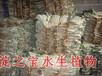 河北淀之宝水生植物种植基地