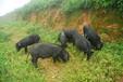 向全州供应各种生态猪肉,有机蔬菜,大米,菜籽油、核桃油、放养土鸡