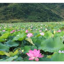 浦城县代写可行性报告的范文-浦城县写报告图片