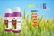 小麦拌种剂哪个产品好好-金巧是您的首选