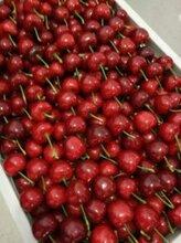 大樱桃批发山东大樱桃种植之乡山东大樱桃产地直销价格图片