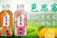内蒙古柠檬茶乌龙茶芭思客果味饮料代理芒果