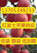 山东冷库苹果低价供应红富士冷库苹果图片