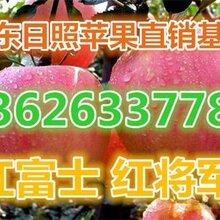山西运城冷库红富士苹果压产地基地批发冷库红富士苹果基地价格压图片