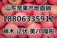 近期美八苹果价格走势