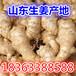 生姜产地精品小黄姜面姜批发基地低价供应行情