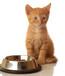 猫粮进口货运 宠物口粮进口清关 宠物用品进口清关