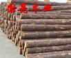 杉木桩日本柳杉桧木落叶松白松原木批发杉木杆