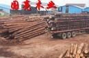建筑木方铁杉方木可定尺加工松木方杉木方