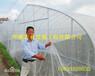 防虫网多少钱一平米?防虫网购买价格咨询
