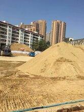 深圳市福田沙子黄沙批发福田沙子批发粗砂细沙图片