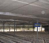 温室大棚食用菌种植加湿系统