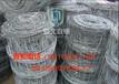 联德丝网生产AJ3F材质高强度镀锌钢丝的草原网铁丝网养殖网养牛网牛栏网
