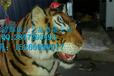 供应动物博物馆动物标本修复老虎标本修复