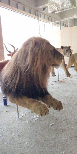 朝陽仿真獅子公司