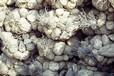 四川砌岸拧花石笼网兜生产厂家围堰格宾网