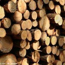 非洲进口木材到广州报关