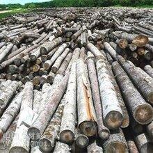 非洲进口木材到上海报关报关手续-流程-费用