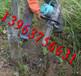 厂家生产全新型树木移植机/铲式挖树机/轻便式移苗机