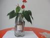 汕头玻璃工艺酒瓶低价促销