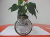 西双版纳花卉玻璃瓶_西双版纳酱菜塑料瓶
