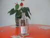 漳州玻璃红酒瓶