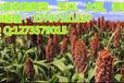 运城收购玉米的实力商家民发大量收购