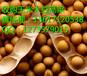 哪里收购玉米价格高现金大量收购玉米收购小麦高粱菜籽饼(欢迎咨询)
