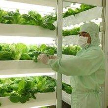 果蔬冷库设计安装找常州冰韬制冷科技,专业的冷库设计专家