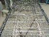 专业生产南京机械流水作业输送带304不锈钢输送带网可定做