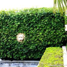 海珠区晓港街道园林绿化鲜花绿植租赁鲜花出售绿化养护植物墙等图片