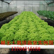 温室植物无土栽培是怎么实现的