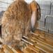 长期出售杂交野兔种兔肉兔兔种长毛兔獭兔包邮包活可回收