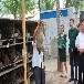 出售大型肉兔兔种肉兔公羊兔种兔养殖市场行情养殖防疫