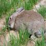 仙桃杂交野兔养殖成本与利润什么地方有卖杂交野兔的养殖场图片