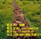 提供质高价廉铅丝笼拧花编织铅丝石笼网河北日创石笼网厂