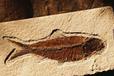 陨石化石恐龙蛋在哪里可以鉴定和出手
