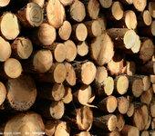 鱼珠木材原料进口加工