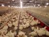 養殖漏糞地板小雞鴨鵝網床養殖設備配件